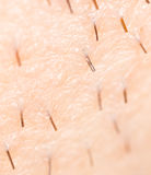 Het varkenshaar op de huid Macro royalty-vrije stock foto