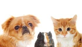 Het vastgestelde huisdier gluren Royalty-vrije Stock Foto