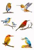Het vastgestelde waterverf schilderen kleurrijk van vogel Stock Foto