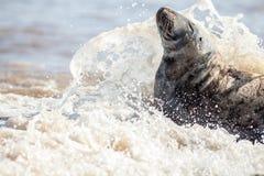 Het vechten elementen Verbinding met zeewater het bespatten over het gezicht royalty-vrije stock afbeeldingen