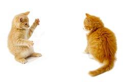 Het vechten katjes royalty-vrije stock afbeeldingen