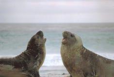 Het vechten op het Strand royalty-vrije stock afbeelding