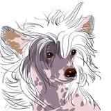Het vector Chinese Kuifras van de Hond Stock Afbeelding