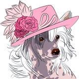 Het vector grappige Chinese Kuifras van de beeldverhaal hipster hond Royalty-vrije Stock Afbeeldingen