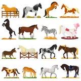 Het vector leuke dier van het beeldverhaalpaard van paard-kweekt of ruiter en horsey of paarden animalistische hengstillustratie vector illustratie