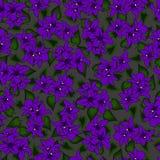 Het vector naadloze patroon bloeit viooltje op grijze bac Stock Foto's