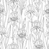 Het vector naadloze patroon met overzichtsiris bloeit, knop en bladeren in zwarte op de witte achtergrond Overladen bloemenachter vector illustratie