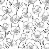 Het vector naadloze patroon met overzichtsjasmijn bloeit in zwarte op de witte achtergrond Elegantie bloemenachtergrond met jasmi vector illustratie