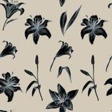 Het vector naadloze patroon van lilly bloeit Hand getrokken vectorillustratie royalty-vrije illustratie