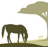 Het vector paard weiden Stock Afbeelding