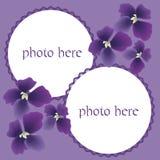 Het vector scrapbooking, beeldengrens met altviolen Stock Afbeelding