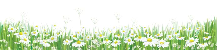 Het vector tot bloei komende madeliefje bloeit gebied stock illustratie