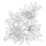 Het vectorboeket met overzichts tropische die Passiebloem of Hartstocht bloeit, knop, bladeren en rank op witte achtergrond wordt royalty-vrije illustratie