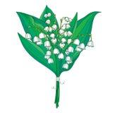 Het vectorboeket met overzichts witte Lelietje-van-dalen of Convallaria bloeit en groene die bladeren op wit worden geïsoleerd stock illustratie
