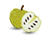 Het vectordiefruit van de Vlaappel op witte achtergrond wordt geïsoleerd Royalty-vrije Stock Afbeelding