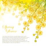 Het vectorhoekboeket met overladen overzichtsmimosa of Acaciadealbata of de zilveren acacia bloeit op de pastelkleur gele achterg Royalty-vrije Stock Afbeeldingen