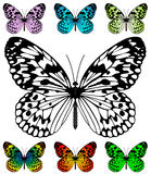 Het vectormalplaatje van de vlinder Stock Afbeelding