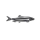 Het vectorontwerp van haringenvissen op een wit Royalty-vrije Stock Foto