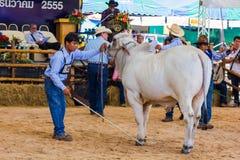 Het vee toont 2012 Royalty-vrije Stock Afbeeldingen