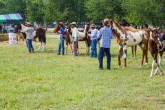 Het vee toont 2012 Stock Afbeelding