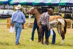 Het vee toont 2012 Royalty-vrije Stock Fotografie
