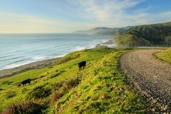 Het vee weidt dichtbij de weg op steile, verdant kustheuvels Stock Afbeeldingen
