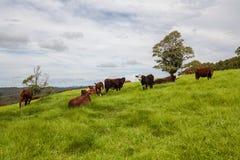 Het veeboerderij van Queensland Royalty-vrije Stock Foto