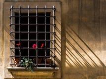 Het venster & de roze bloemen royalty-vrije stock foto's