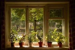 Het venster in de zomer Royalty-vrije Stock Foto