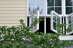 Het venster van de architectuur en boomtak Stock Fotografie