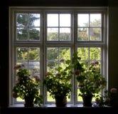 Het venster van de bloem Stock Afbeeldingen