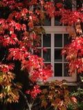Het venster van de herfst Stock Foto's