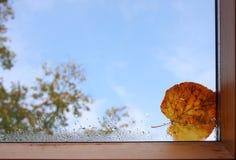 Het venster van de herfst stock fotografie
