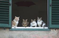 Het venster van de kat Stock Foto