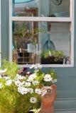 Het venster van de tuinliedenloods het groeien installaties en bloemen Royalty-vrije Stock Fotografie