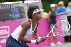 Het Venus van Williams - grote kampioen (9) Stock Foto