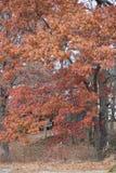 Het veranderen van de bladeren Royalty-vrije Stock Afbeeldingen