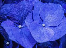 Het verbazende bloemen bloeien royalty-vrije stock fotografie