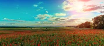 Het verbazende gebied met papaver bloeit in het zonlicht op de kleurrijke wolken op tehemel Royalty-vrije Stock Foto