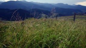 Het verbazende landschap van de bergzomer stock footage