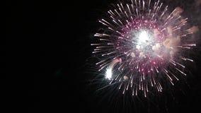 Het verbazende Vuurwerk toont Heldere plonsen van bloemen van begroeting tegen nachthemel De dag van de overwinning stock video