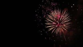 Het verbazende Vuurwerk toont Heldere plonsen van bloemen van begroeting tegen nachthemel De dag van de overwinning stock videobeelden