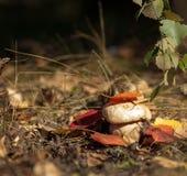 Het verbergen in de bladeren stock afbeeldingen