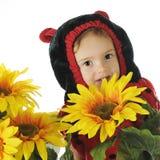 Het verbergen onder de Zonnebloemen Royalty-vrije Stock Afbeeldingen