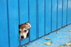 Het verbergen van de hond Royalty-vrije Stock Afbeeldingen