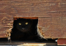 Het verbergen van de kat in een loods. Stock Afbeeldingen