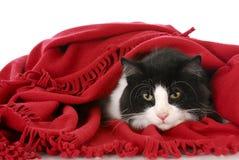 Het verbergen van de kat onder deken Stock Afbeelding