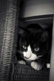 Het verbergen van het katje Stock Afbeeldingen