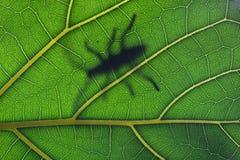 Het verblijf van het insect op blad stock afbeeldingen