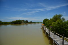 Het verdelen van de wolken in mangrovebos Stock Afbeeldingen